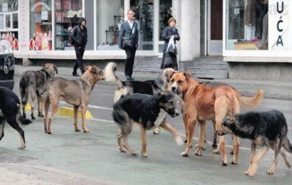 Počinje uklanjanje pasa lutalica sa zeničkih ulica