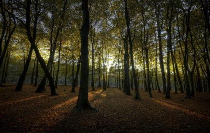 Pola sata u dubokoj šumi štiti dva mjeseca vaš imunitet!