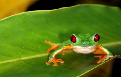 Žabe vide u boji u uvjetima potpunog mraka