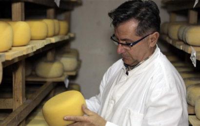 Livanjska mljekara jača proizvodnju sira od domaćeg ovčijeg i kozijeg mlijeka