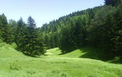ZDK: Obavijest za vlasnike privatnih šuma